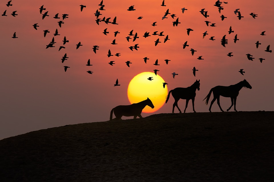 sunset-landscape-1031769_960_720Pixabay
