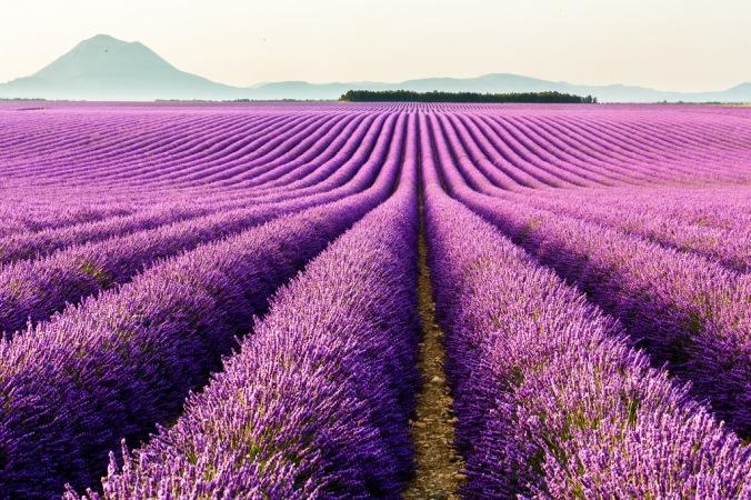Valensole Provence Flickr Matheus Swanson