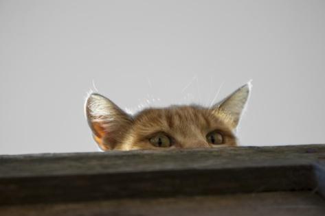 spy-cat-1474621661xRV